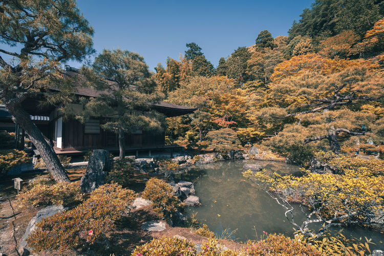Architecture Artistic Autumn Film Japanese  Nature Travel Tree Vacations Change Culture Day House Look No People Outdoors Seasonal Traditional