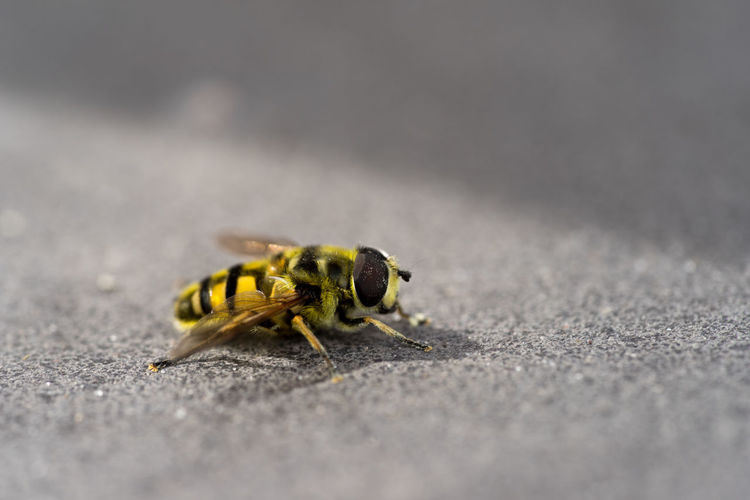 Close-up of bee on street