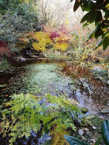 Merendi's Garden Perspectives On Nature Tranquility Breathing Space The Secret Spaces