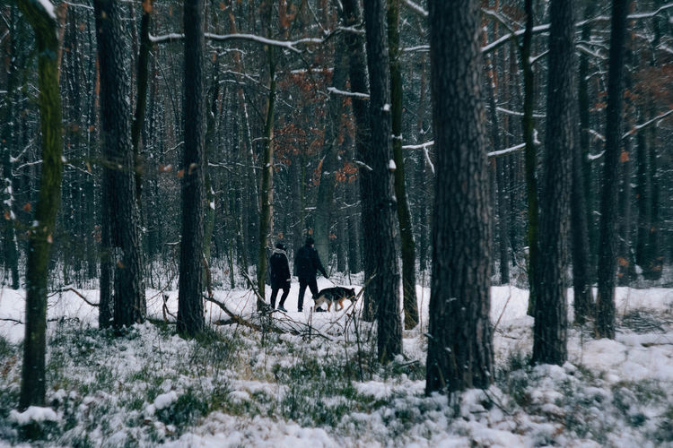 View of people in forest during winter