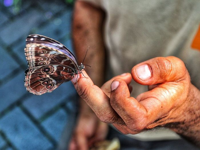 Close-Up Of Butterfly On Man Hand