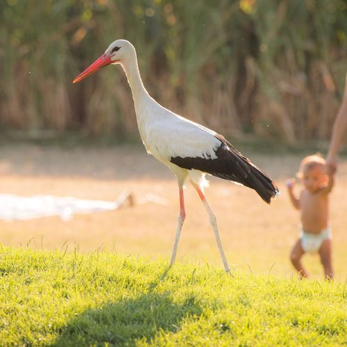 Klapperstorch Pricelessmoments  Priceless Symbol Saying Parent Toddler  Meaning Cute Funny Storytelling Klapperstorch Storks In The Wild Pregnancy Pregnant Message Symbolic  Baby Stork Bird Nature Animal Wildlife Water One Animal Animals In The Wild Outdoors