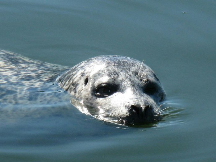 Harbor seal Hanging Out