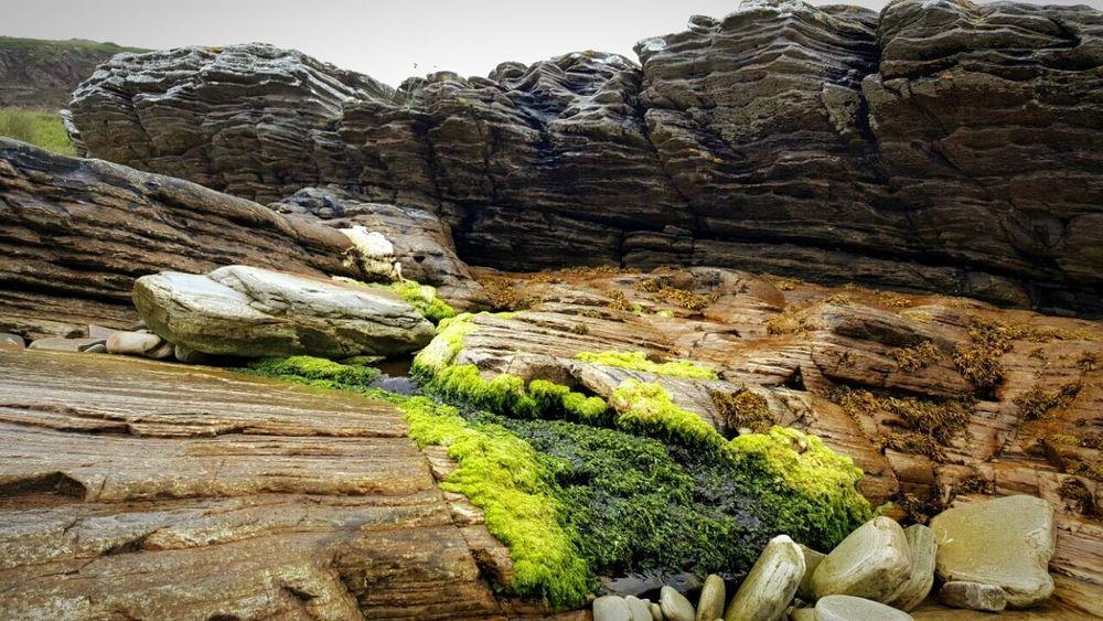 Rocky Hills Sea Weeds