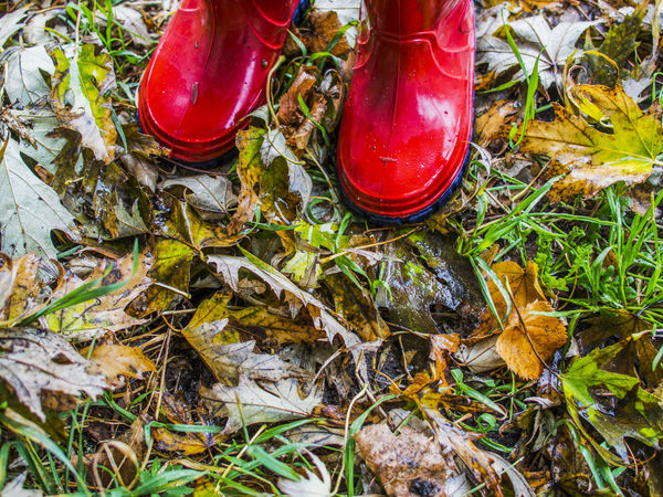 kid in red gumboots on the fallen leaves Boots Fallen Field Gumboots Human Foot Kid Leaves Low Section Outdoors Person Red Rubber Rubber Boot Selective Focus Standing