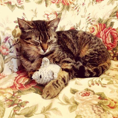 Pet Portraits Cat & mouse Sleeping Cat Mouse Kitten Friendship