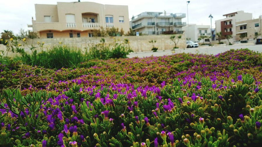 Flower Budynki Makro Photography Nature Ogrodek Rosliny Włochy Flower Residential Building Purple House Flower Head Architecture Building Exterior Sky Built Structure Plant