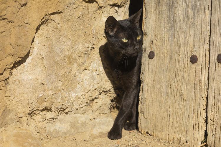 Black cat on wood