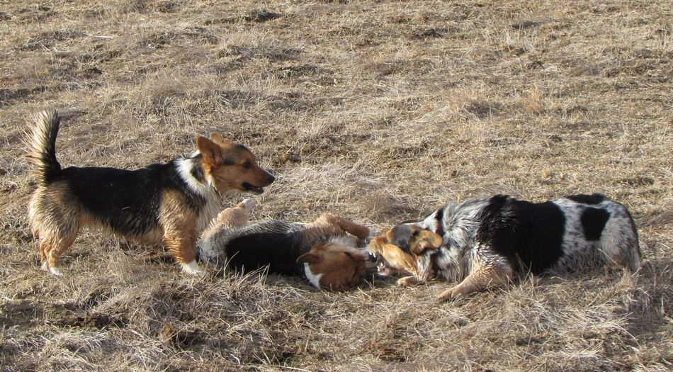 Dogs playing in field on sunny day