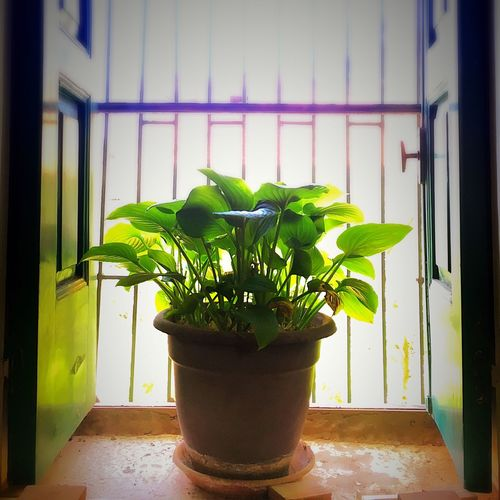 Lonely Plant Soaking Up The Sun Green Window Backlight Backlit Backlighting