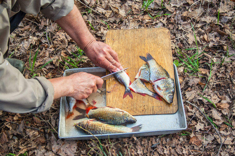 Cropped hands of man cutting fish on field