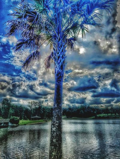 Cloud - Sky Adobe Creations Colorsplash Art Is Perception Nature Palm-tree Water Pure Bada** Pic Is Worth Thousand Words Backgrounds Beauty In Nature Outdoors Close-up Day Sky BLUE!!!!! GOOD-MORNINGEYEEM
