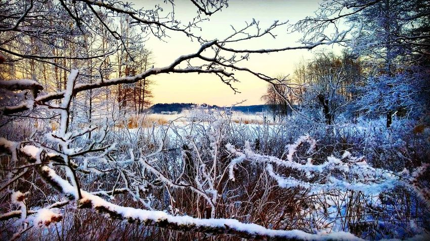 Winter Winter Wonderland Turku Ruissalo Snow Winterview Nature Nature Photography Naturelovers Purenature Thisisfinland Visitfinland