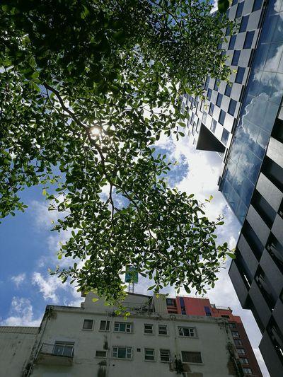 Taking Photos Uprisen Angle Sky Tree Building Reflection