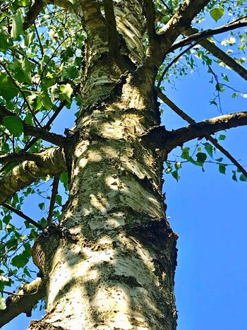 Shadow play 😉 Tree Plant Trunk Tree Trunk Nature No People Beauty In Nature Day Outdoors