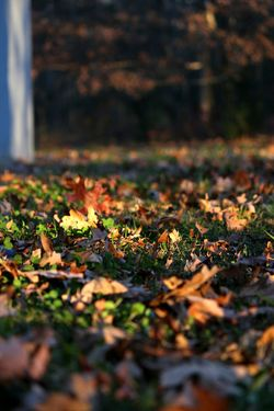 EyeEmNewHere Autumn Autumn Colors Autumn Leaves Autumn🍁🍁🍁 Leaf Leaves EyeEm Selects Leaf Change Nature No People Selective Focus Outdoors Beauty In Nature Close-up