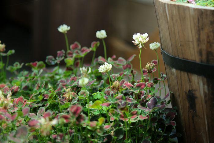 EyeEm Nature Lover Flowers 花 Nature Plants Plants 🌱 花と庭 In My Garden Flowers,Plants & Garden ガーデニング