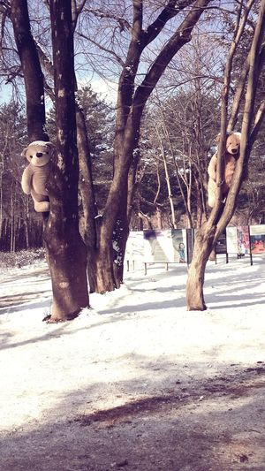 Nami Island Teddy Bears Namiisland Have A Nice Day♥ TeddyBears On The Tree Nice Surprise! Whyyouupthere? Check This Out Cheese! Hello World Visit Korea Gapyeong Hi! Winter 2015 Teddies Winter Trees Korea Photos Eye4photography  Tbt ❤ Big Teddy Bear