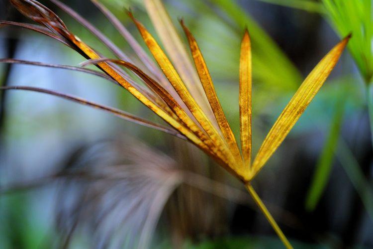Leaf Palm Leaf