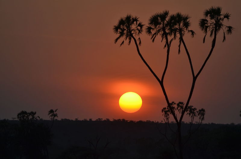 Sun down on the Masai Mara, a spell binding photo and one of my all time favourites. Beauty In Nature Growth Idyllic Landscape Nature No People Non-urban Scene Orange Color Outdoors Palm Tree Plant Romantic Sky Scenics - Nature Silhouette Sky Sun Sun Down Evening Sunset Tranquil Scene Tranquility Tree Tropical Climate