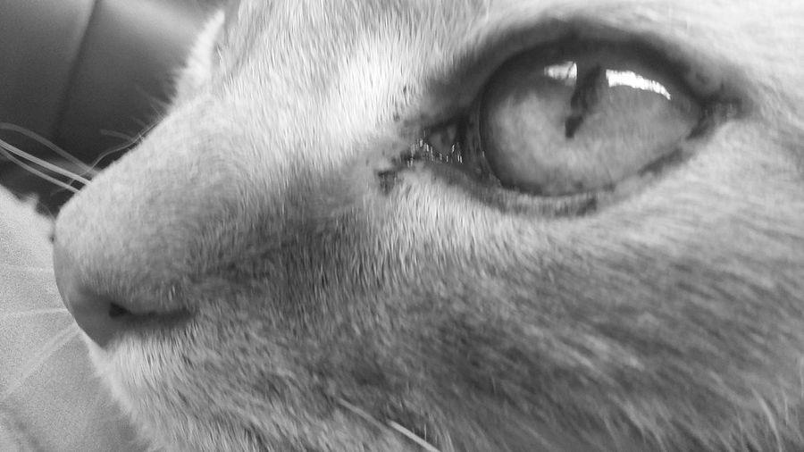 Animal Pet Cute Critter Blackandwhite Black&white Cat Kitty Adorable Living