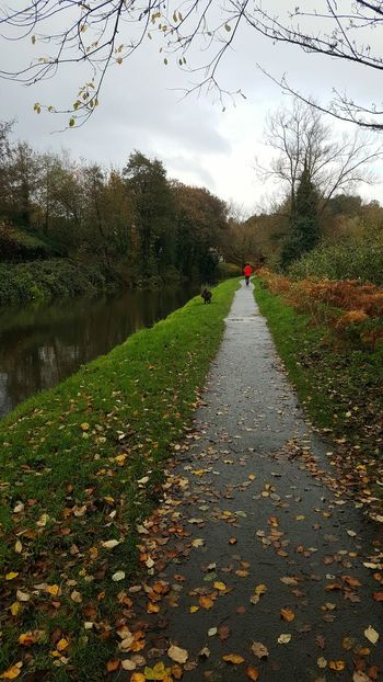 Morning Walk The Way Forward Tree Nature Green Color Sky Red Leaves Canal Towpath No People Beauty In Nature Growth Outdoors Tranquility Scenics Day Water