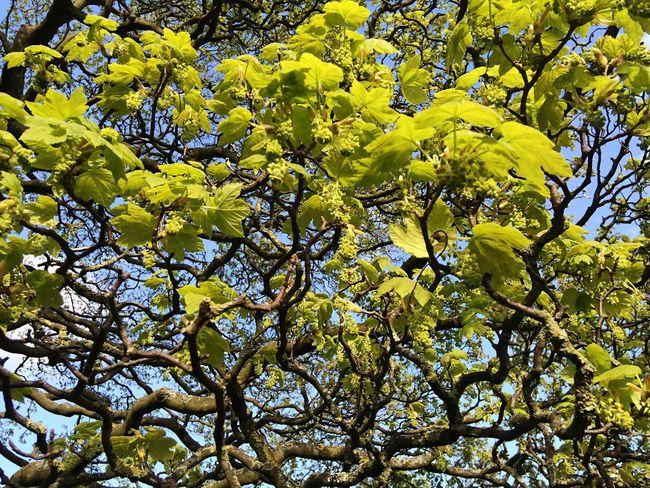 Edale Green Tree Springtime Hiking Sunset Dusk Blue Sky 43 Golden Moments