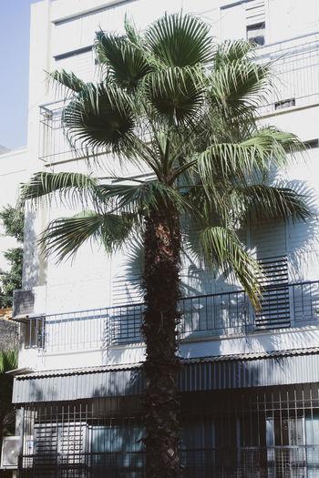 palm tree EyeEm