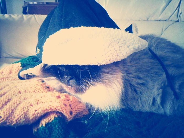 Fluffy  Kitty With Hat