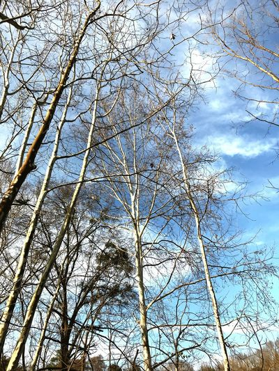 Nature_collection Low Angle View Tree Branch Bare Tree Sky Nature Day Beauty In Nature No People Outdoors Growth
