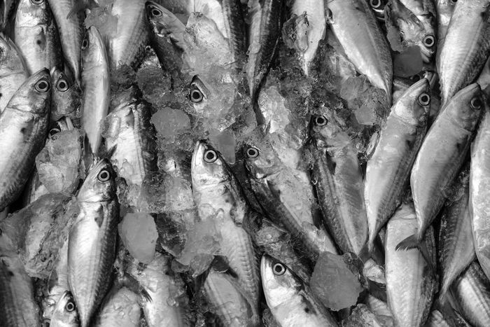 Fresh mackerel fish Consumerism Fish Fish Market Fishing Industry Food Food And Drink For Sale Freshness Healthy Eating Ice Mackerel Fish Market Raw Food Retail  Sale Seafood Vertebrate Wellbeing