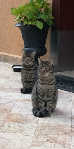 Brothers Cats