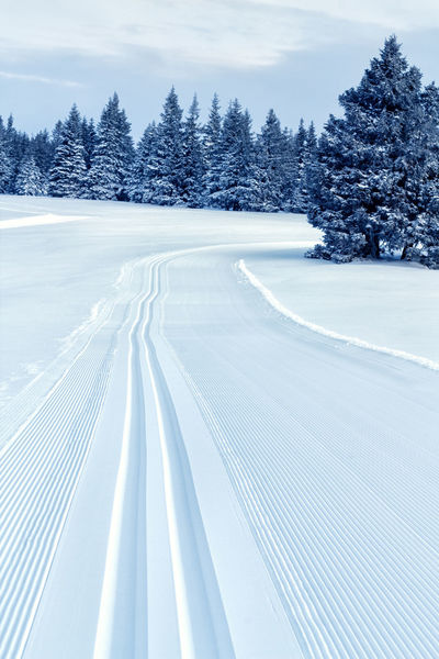 Freshly made cross country skiing tracks Beauty In Nature Cold Temperature Coniferous Tree Crosscountry Skiing Day Early Morning Fresh Tracks Landscape Nature No People Outdoors Rogla Scenics Skiing Track Sky Snow Tranquil Scene Tree White Winter