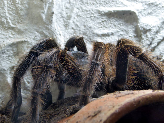 Very Impressive Creatures Animal Themes Nature Close-up Zoom ♡ Spider Vogelspinne Nature Insects And Spider Exhibition Do Not Touch!..ok😄 For My Friends 😍😘🎁 Really Big Spider🕷😎 I'm Not Afraid