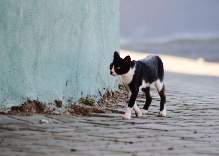 Side view of cat walking on street