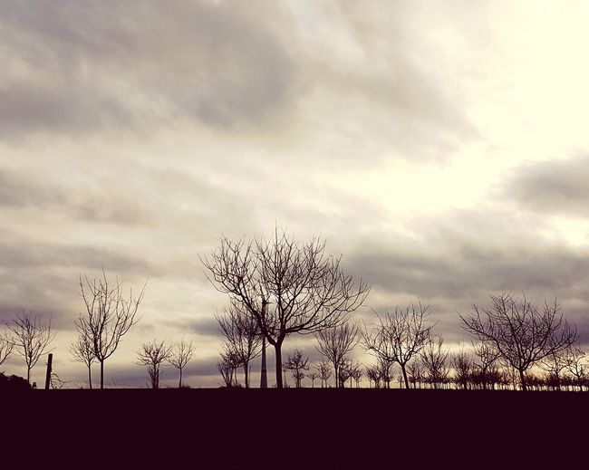 naked. Tree Silhouette Sky Cloud - Sky Sky Only Storm Cloud Meteorology Cloudscape Dramatic Sky