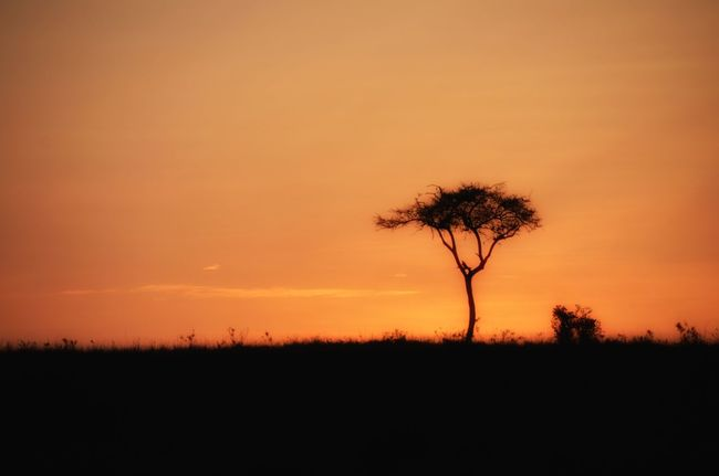 Tree Nature Landscape Tranquility Silhouette Lone No People Outdoors Sky EyeEmNewHere Travel Destinations Beautiful Kenya Masai Mara Sunrise