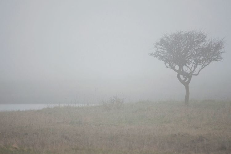 Trees in foggy weather
