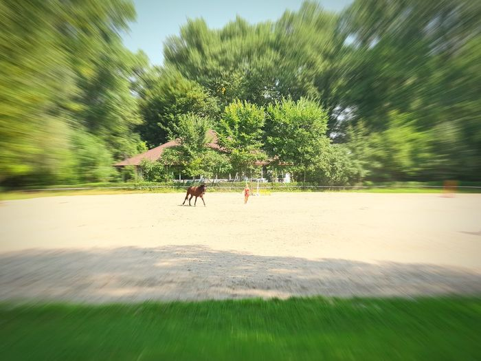 ❤️ Poland Horse