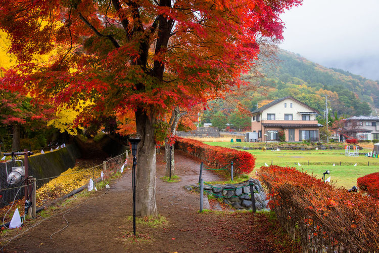 Trees and houses in park during autumn