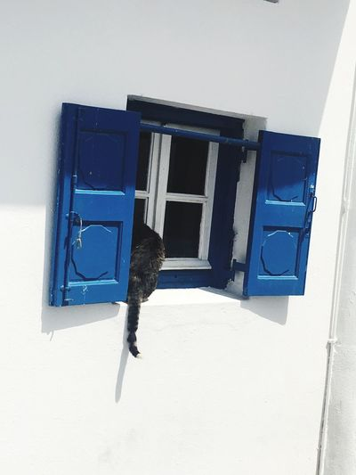 Kitty in the window Built Structure Architecture Building Exterior No People Blue Day Wall - Building Feature Window Low Angle View Mailbox House Building Sunlight Shadow Metal White Color Nature Door Safety Outdoors
