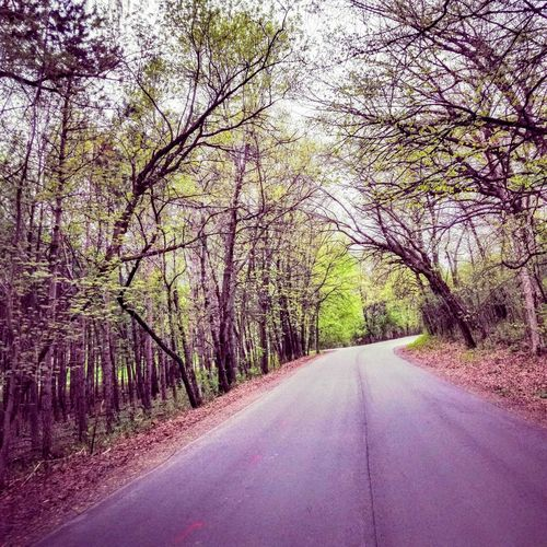 country road Beauty In Nature Day Diminishing Perspective Direction Empty Road Forest Growth Land Nature No People Non-urban Scene Outdoors Plant Road Sign Symbol The Way Forward Tranquil Scene Tranquility Transportation Tree Treelined