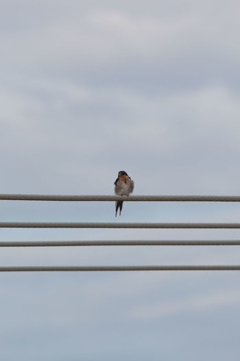 Low angle view of bird perching on cables against sky