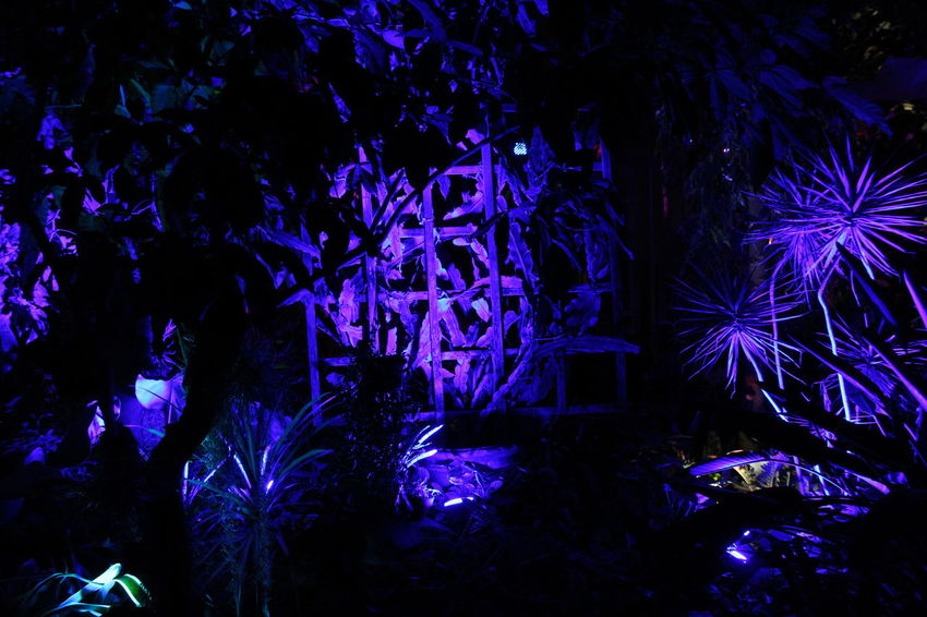 Botanical Gardens Flowers Illuminationphotography Nightphotography Night Lights Light And Shadow Colors Flower Dark Plants 🌱 Plants And Flowers Night Celebration Illuminated Blue No People Outdoors