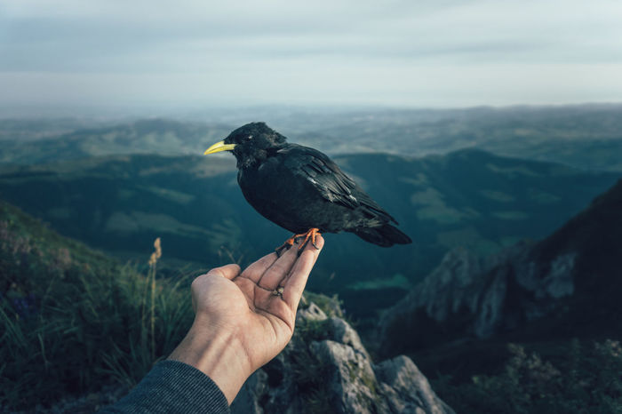 A wild bird sitting on a person's hand in the Swiss mountains Alpen Alps Alpstein Appenzell Appenzellerland Bird Bird On Hand Europe Hiking Mountain Life Mountains Mountains And Sky Nature Nature Outdoors Peaceful Remote Scenics Schweiz Suisse  Swiss Swiss Alps Switzerland Tranquility Tranquility