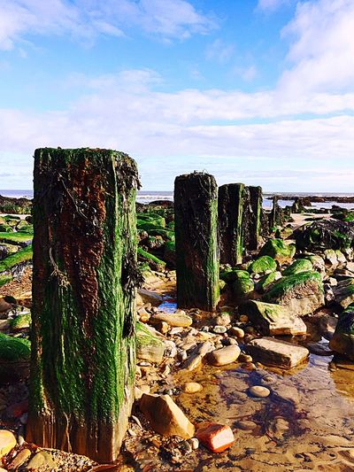 Sky No People Cloud - Sky Beach Beauty In Nature Seaweed Wooden Posts Rocks The Week On EyeEm Green Lost In The Landscape Coastal Feature Coastline Rock Pools From My Point Of View North East England British Seaside