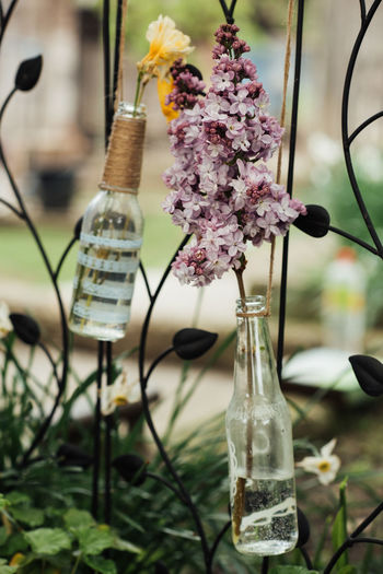 Bottle Decoration Focus On Foreground Freesia Lily Flower Purple Spring Flowers Wrought Iron Yellow