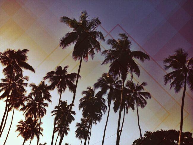 Nature Sunrise Conceitual Artistic Photo
