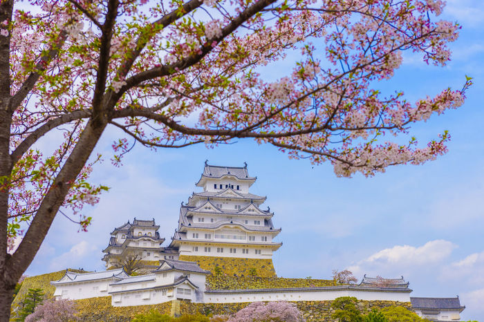 Japan Himeji castle , White Heron Castle in beautiful sakura cherry blossom season good sightseeing and best travel destination in Himeji,Japan. Ancient Architecture Beauty In Nature Branch Building Exterior Built Structure Day Growth Himeji Castle History Japan Japanese Culture Low Angle View Nature No People Outdoors Place Of Worship Religion Sakura Sakura Blossom Sakura2016 Sky Spirituality Travel Destinations Tree