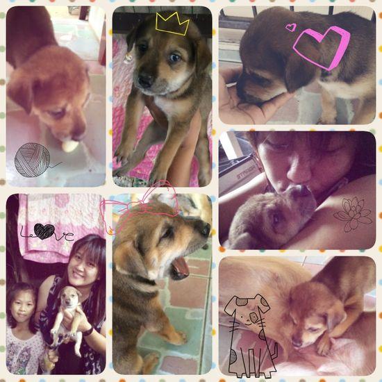 Love Me Love My Dog.....???❤️❤️?